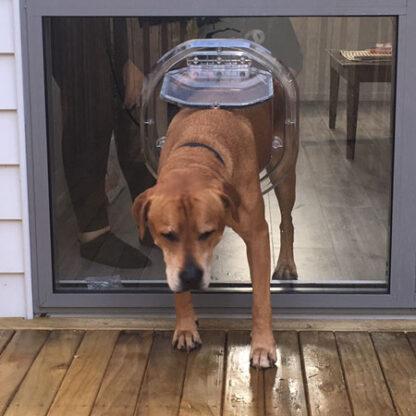 42kg dog pa42kg dog passing through a Dogwalk Large Dog Doorssing through a Dogwalk Large dog door