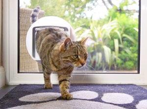cat entering house through cat door