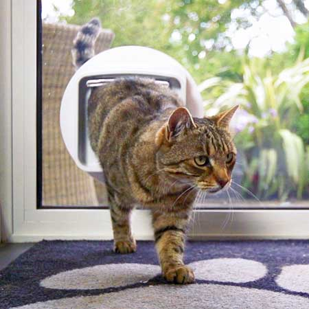 SureFlap DualScan cat door (white) installed in glass & DualScan microchip cat door for glass | Cat Door Company Pezcame.Com