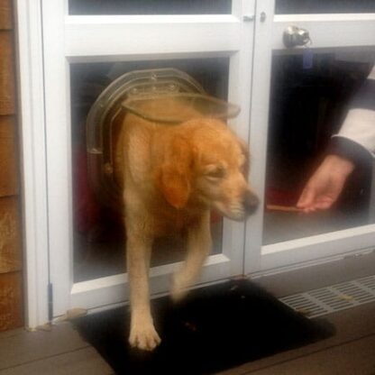 Caroline Campbell of Waterview teaches her 40kg dog Vida how to use the DogWalk door.